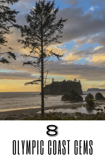 Pinnable Image of Looking through tall, skinny trees onto beach with sea stacks and rolling waves. Sun is setting and sky is yellow