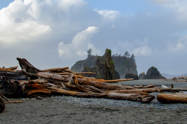 Looking out at driftwood and hazy sea stacks on a beach