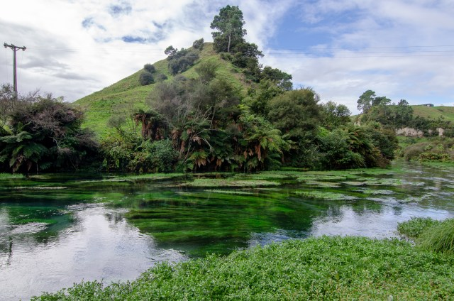 Crystal clear water filled with green plants. In the background is a large green hill covered in trees and shrubs