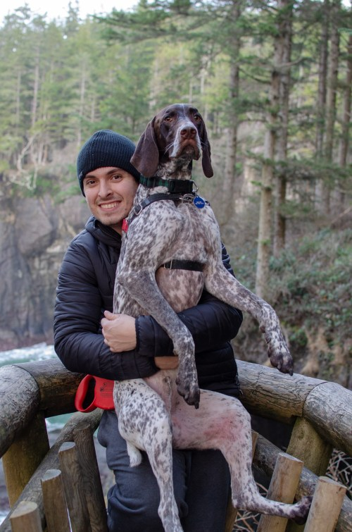 Man holding big German Shorthaired pointer on a fenced ledge overlooking trees on Olympic Peninsula