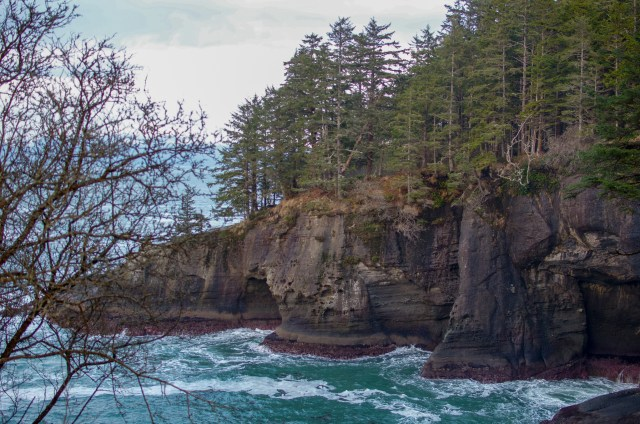 Brown cliffs of headland covered in tall coniferous trees, dropping suddenly into churning blue water below