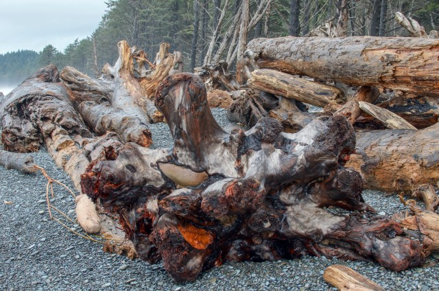 Large mangled driftwood in different shades of brown cover a black pebble beach