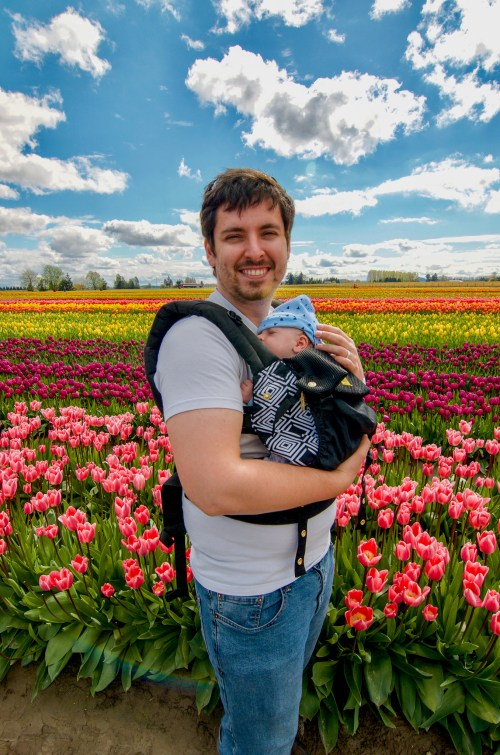 Smiling man in white shirt carrying baby in baby carrier, in front of rows of tulips