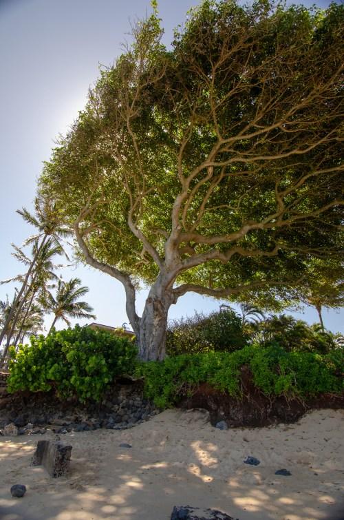 Light falling through tree on a beach