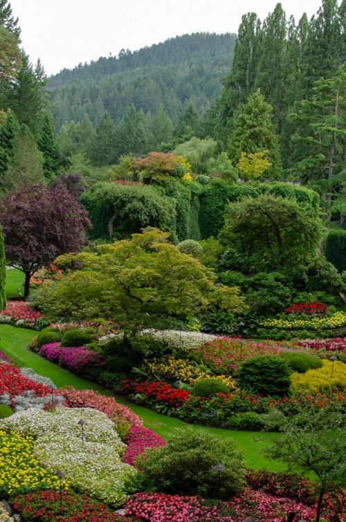 Looking down at trees and flowers in a garden