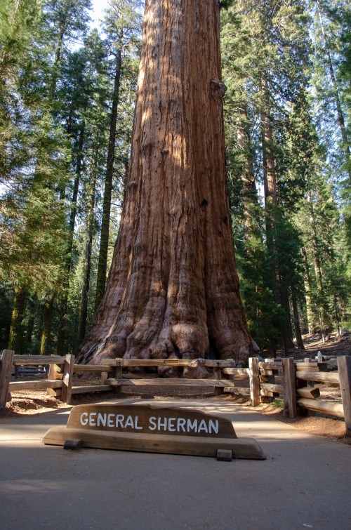 "The bottom part of the trunk of the tallest tree, surrounded by signage ""General Sherman"""