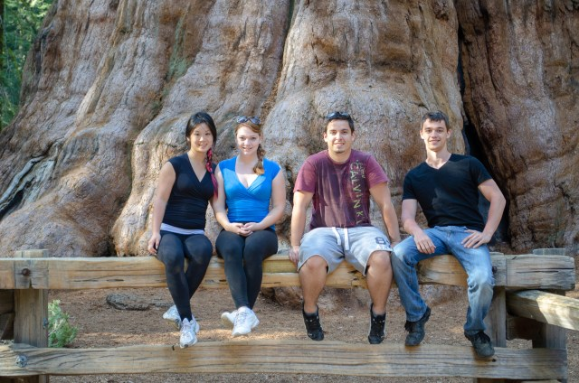 Four people sitting at the base of the world's largest tree; they barely cover a fraction of it