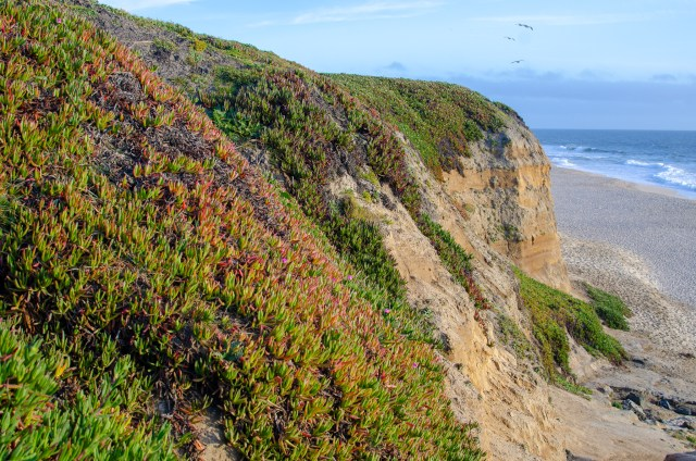 Hills covered in greenery and flowers, that lead onto a sandy beach