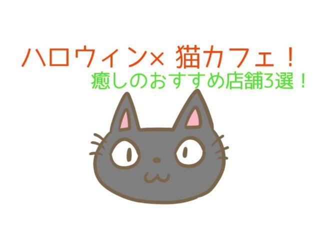 ハロウィンの猫カフェ!秋葉原や新宿のオススメ!