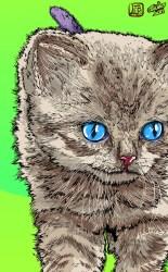 gato-frame-001