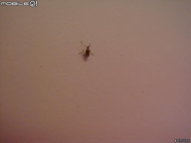 [急] 惱人的室內小黑飛蟲 - 有人知道這到底是什麼/要怎麼處理呢? - Mobile01