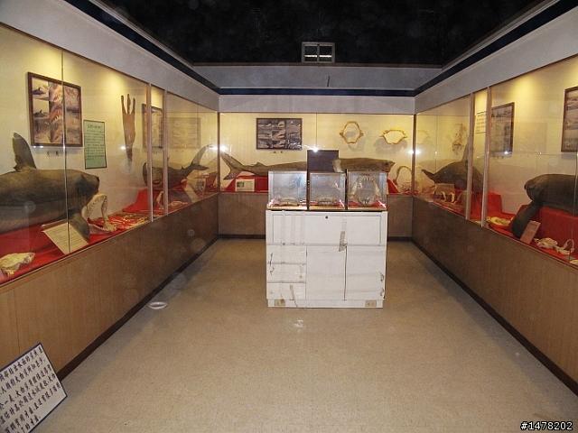 鯊魚博物館 鯊魚黑幫 - 臺東縣 - 旅遊美食討論區 - Mobile01
