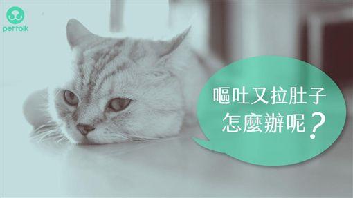 ぜいたく 貓血便ptt - アニマルピクチャーコレクション