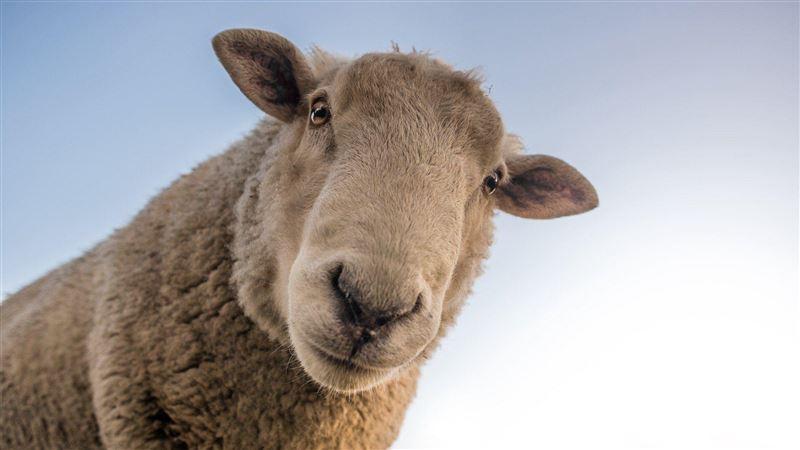 睡不著為何「要數羊」?他曝神奇原因:我們應該數「這個」   生活   三立新聞網 SETN.COM