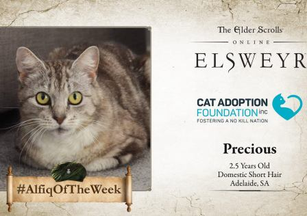 Elder Scrolls Elsweyr Cat Adoption