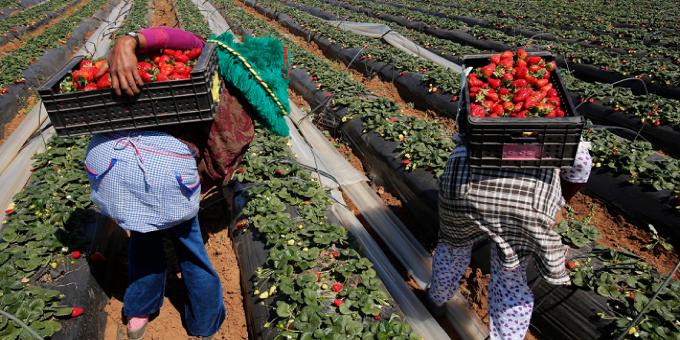 السيادة الغذائية في المغرب