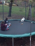 Herbie is enjoying the warmer weather - bird watching on the trampoline!