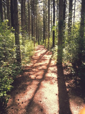 A trail on one of the Geneva Lake Conservancy's privately held easement properties.