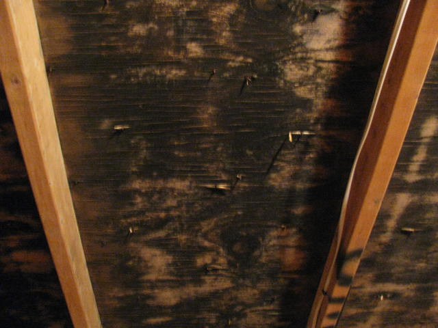 attic mold picture
