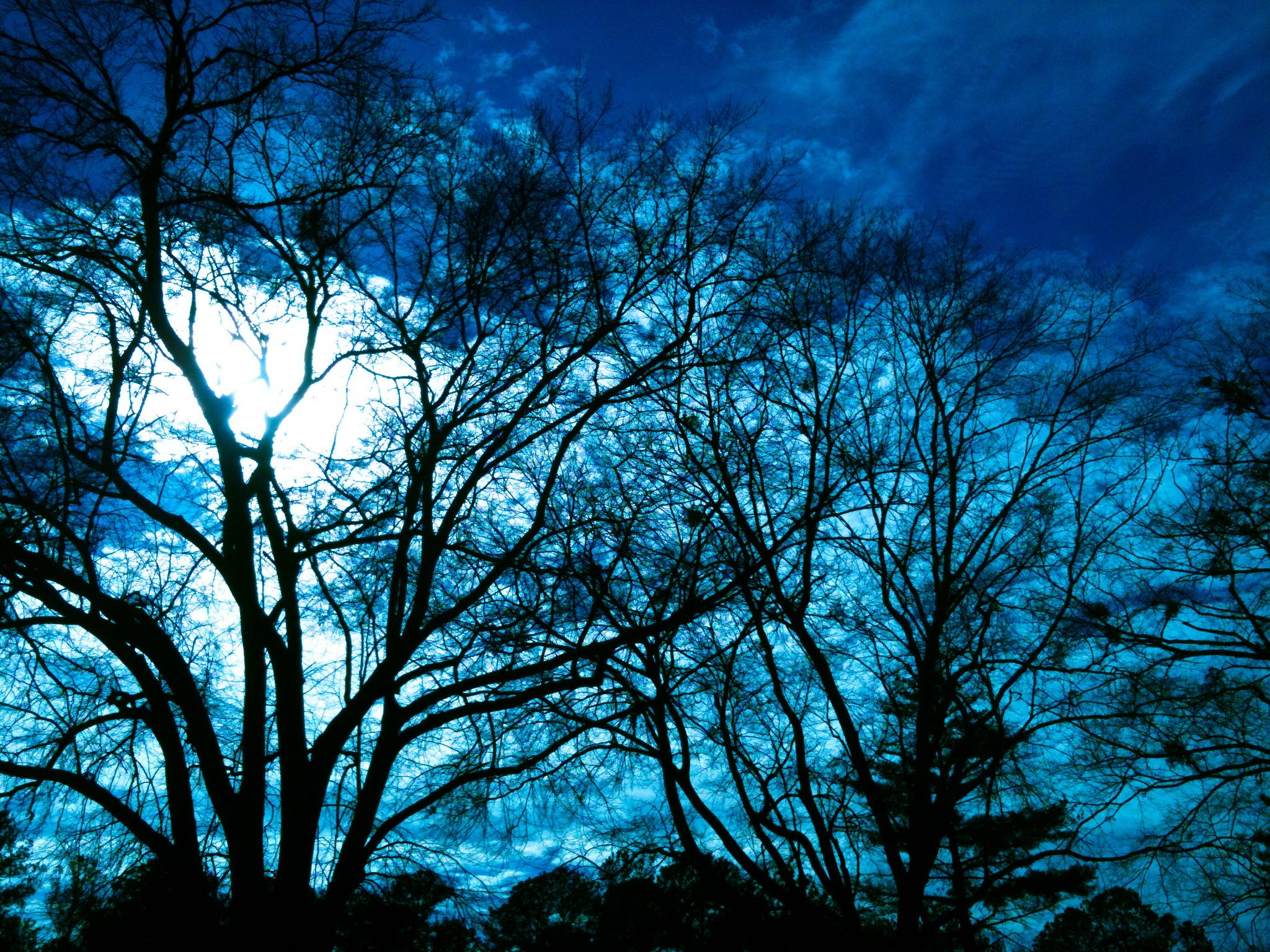 Gorgeous Winter Night Sky Attracting Wellness
