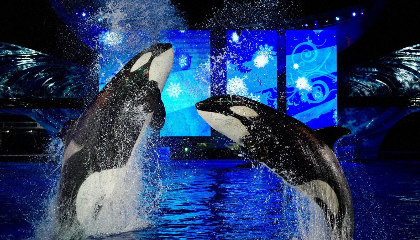 Image result for seaworld christmas