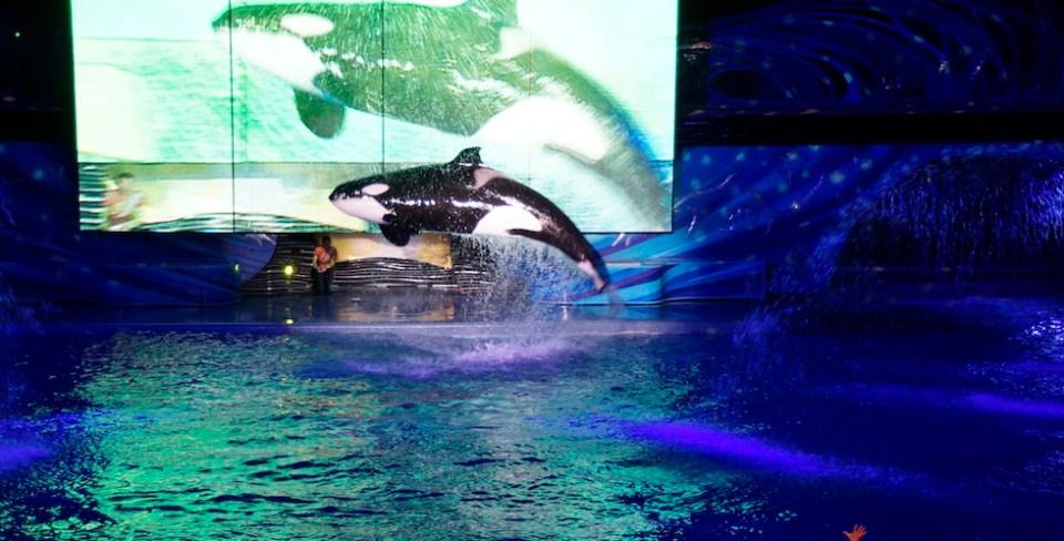 Shamu jumping at night at seaworld orlando
