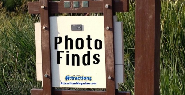 Photo Finds image