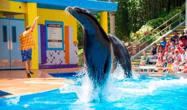 Clyde & Seamore's Sea Lion High SeaWorld Orlando