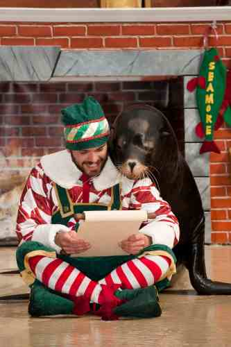 swo_clyde-seamores-countdown-to-christmas_onesealion