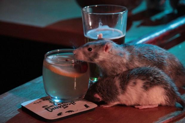 rat bar