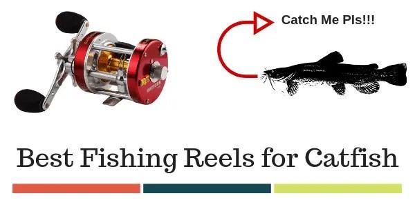 Best Reels For Catfish