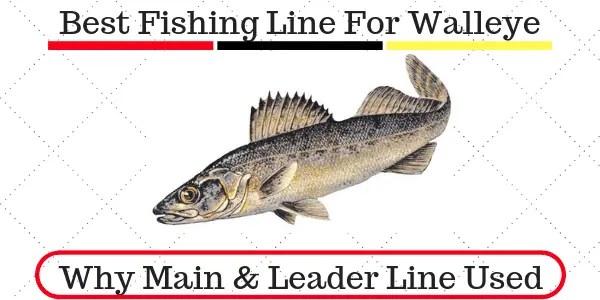 Best Fishing Line For Walleye