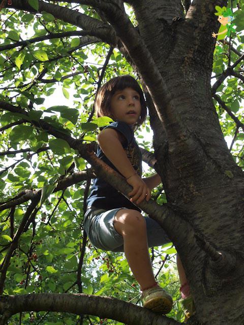 Incontri sugli alberi...