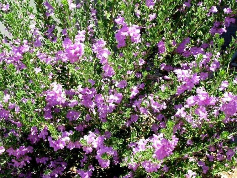 Desert gardening 5