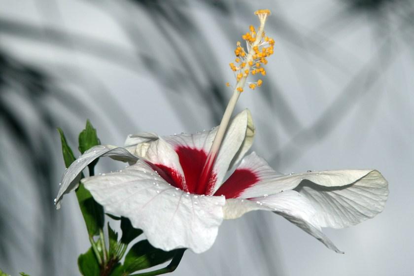 Min nya vana - att kunna blomma