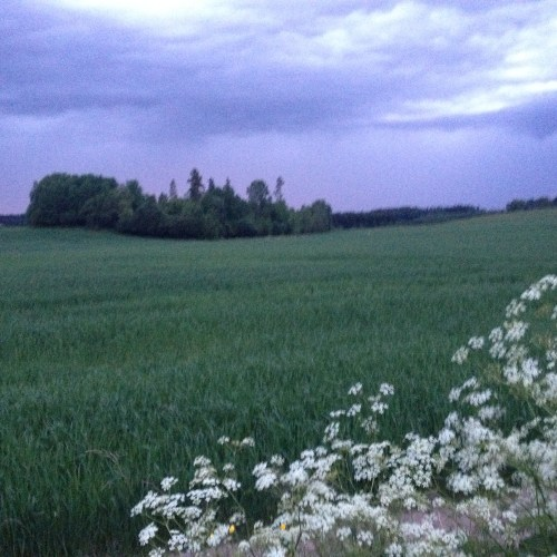 Natten i juni