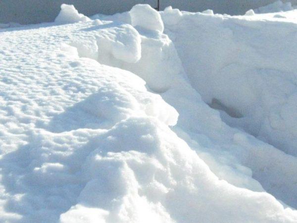 Сонник снег снегопад сугробы К чему снится снег