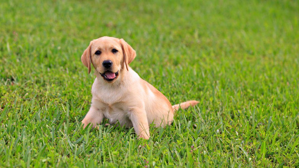 Indigestia la câini. Simptome, remedii, prevenție