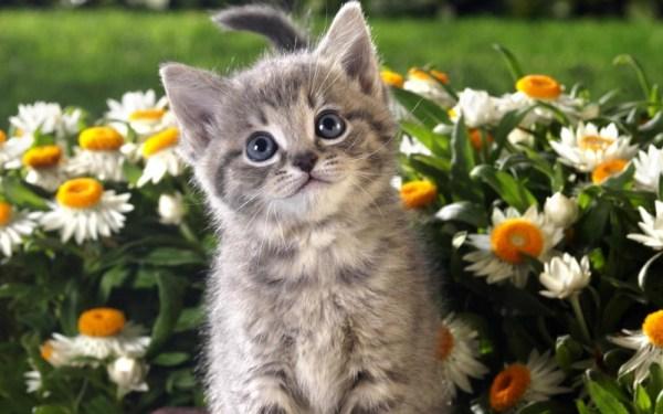 Имена для котят мальчиков и девочек − редкие и красивые ...