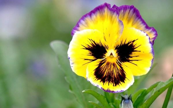 Майские цветы 🌷: список с названиями и фото, описание ...