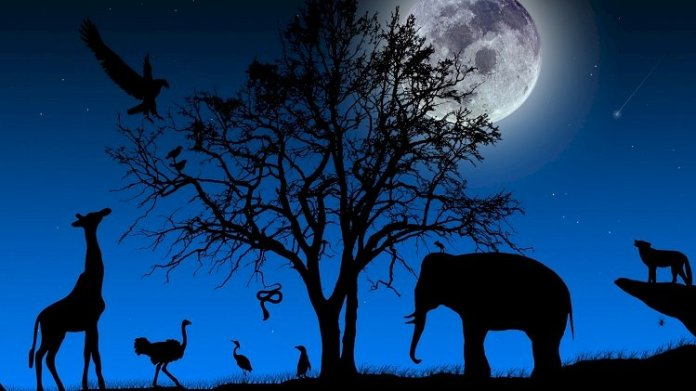 सुरक्षित जानवर संतुलित प्रकृति
