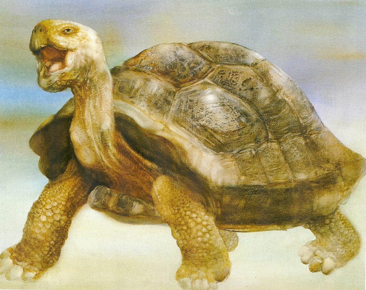 Story Of Old Turtle