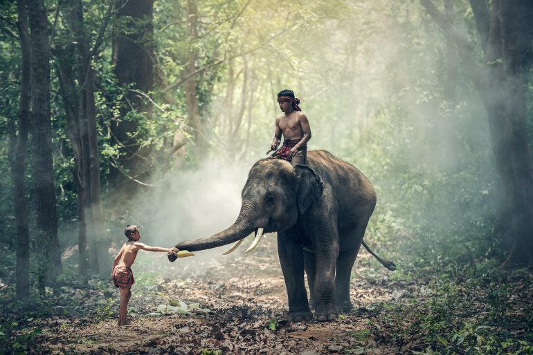 A child riding an elephant