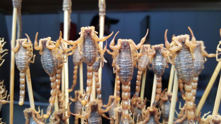Fried scorpions