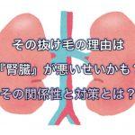 その抜け毛の理由は『腎臓』が悪いせいかも?その関係性と対策とは?