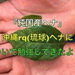 『純国産ヘナ』沖縄rq(琉球)ヘナについて勉強してきたよ!