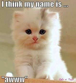 341878-cats-awww