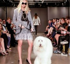 Dogs Take to the Catwalk in Fashion X Furry Friends Show