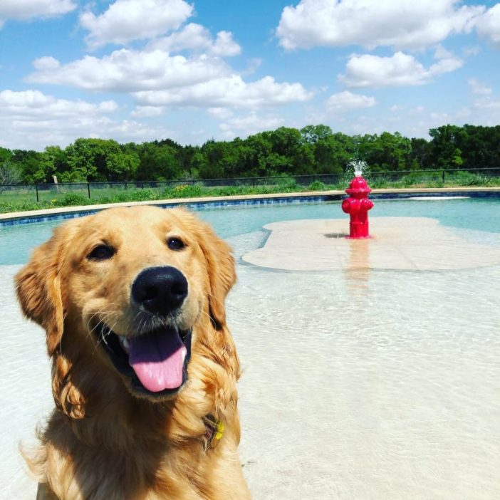 Jumping Jack Dog Ranch pool golden retriever