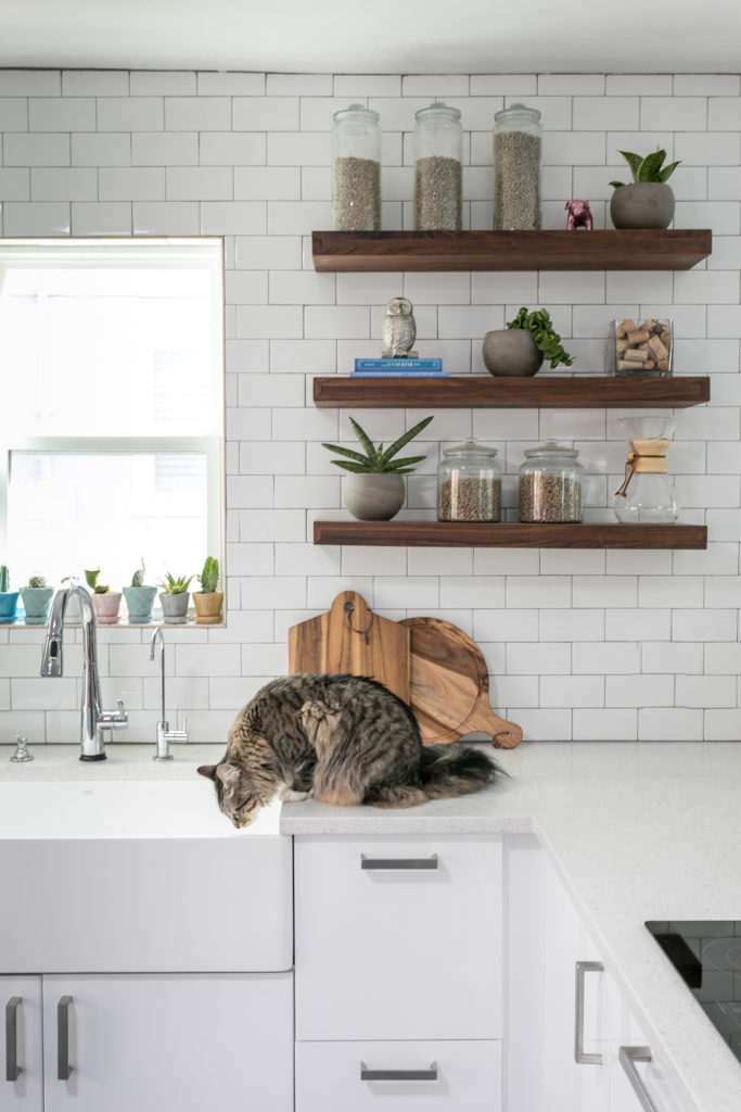 pet-proof your home - cat kitchen